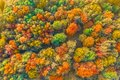 Autumn bright multi-colored trees, green, orange and reddish tint. Autumn in forest, aerial top view look down Royalty Free Stock Photo
