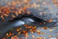 Autumn by the brook shallow depth of field beautiful blur Royalty Free Stock Photos