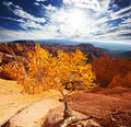 Autumn in bryce canyon fall season Royalty Free Stock Photo