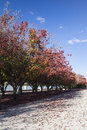 Autumn burley griffin lake canberra australia colours embankment of near national gallery Stock Photo