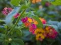 Autumn bush wild flowers Royalty Free Stock Photo