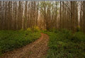 Autumn bypath through forest foot path dense Stock Images