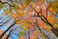 Autumn canopy Royalty Free Stock Photo