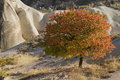Autumn in cappadocia tree stone valley turkey Royalty Free Stock Image