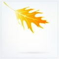 Autumn card with falling leaf on white background vector illustration of a abstract blurry modern drawing for poster template Royalty Free Stock Photo