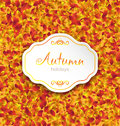 Autumn card on orange leaves texture september background illustration vector Royalty Free Stock Image