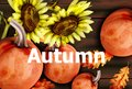 Autumn card with pumpkins and sunflower Vector watercolor style decors Royalty Free Stock Photo