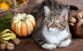 Autumn Cat Royalty Free Stock Photo