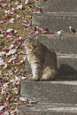 Autumn cat a gray and orange sitting on old concrete steps blends in with the leaves and grass colors Stock Photo