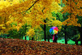 Autumn in central park, manhattan, new york Royalty Free Stock Photo