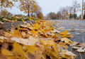 Autumn in the city defoliation time warm Royalty Free Stock Images