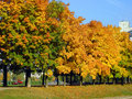 Autumn in city park Stock Image