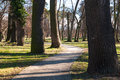 Autumn city park meandering trail in with huge tree alley Stock Image