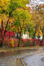 Autumn cityscape after rain with yellowed trees and street lamp urban landscape of the old town is wet red ivy on the wall lamps Royalty Free Stock Images