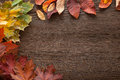 Autumn classified on the tree with leaf frame for words and insc Royalty Free Stock Photo