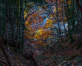 Autumn clearing colored trees seen through a forest Stock Photos