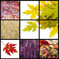 Autumn collage with different pictures Stock Photography