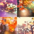 Autumn collage Royalty Free Stock Photo