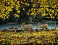 Autumn cologne germany in germany Royalty Free Stock Image