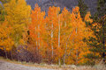 Autumn color in the rockies colorado Stock Images