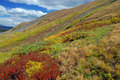 Autumn color sawatch range rocky mountains the american west colorado rockies usa Royalty Free Stock Image