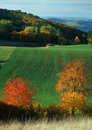 Autumn color spectrum Royalty Free Stock Photography