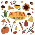 Autumn colored doodles - umbrella, rain, corn, rubber boots, sunflower, mountain ash, crop of vegetables, vector set of elements Royalty Free Stock Photo