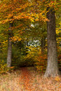 Autumn colored forest Royalty Free Stock Photo