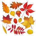 Autumn colored leaves collection