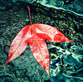 Autumn colorful leaf of maple on the rock retro style Royalty Free Stock Photo