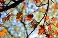 Autumn Colorful Leaves Backgro...