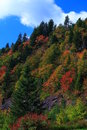 Autumn colors cover the blue ridge mountains falls has arrived to mountain with an array of color everyday more color blossoms Stock Images