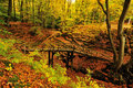 Autumn colors in the forest Royalty Free Stock Photo