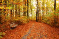 Autumn colors forest in october Stock Images