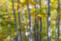 Autumn colors in the forest soft focus image of trees mount pelion central greece Stock Photo