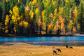 Autumn colors, Kanas, Xinjiang China Royalty Free Stock Photography