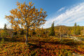 Autumn colors in lapland rich Royalty Free Stock Photography