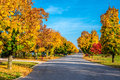 Autumn colors line a street Royalty Free Stock Photo