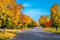 Autumn Colors Line A Street