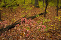 Autumn colors in midwest state park. Royalty Free Stock Photo