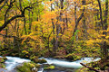 Autumn colors of oirase stream at aomori japan Royalty Free Stock Photos