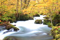 Autumn colors of oirase stream aomori japan Stock Photography