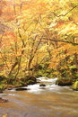 Autumn colors of oirase stream aomori japan Royalty Free Stock Photos