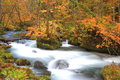 Autumn colors of oirase stream aomori japan Stock Photo