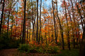 Autumn Colors in Pennsylvania Woodlands Royalty Free Stock Photos