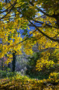 Autumn colors in Pyrenees mountains Stock Image