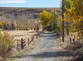 Autumn colors ranch driveway cottonwood trees in line a to a Royalty Free Stock Image