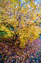 Autumn colors within southern city limits in late november Royalty Free Stock Photos