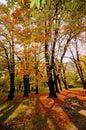 Autumn colors at sundown Royalty Free Stock Photo