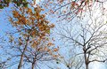 Autumn colors on a sunny day Royalty Free Stock Photo